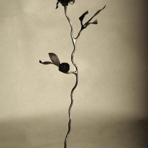 Růže - STUDENTSKÁ PRÁCE, kov, výška 67 cm