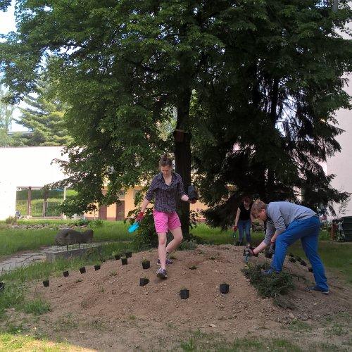 Realizace dosadeb záhonů v přírodní zahradě v areálu školy