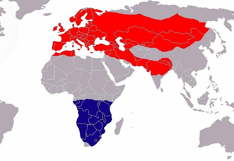 """Mapa hnízdišť a zimovišť, """"Zdroj a licence""""((Mauersegler map, Autor: Vardion, Dostupné z: https://commons.wikimedia.org/wiki/File:Mauersegler_map.png [cit. 2015–09–06], Public Domain))"""