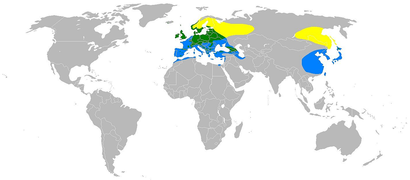 """Mapka rozšíření čížka lesního– žlutě letní výskyt, zeleně celoroční výskyt, modře– zimoviště, """"Zdroj a licence""""((Rangemap-tarin, Autor: Gretaz, Dostupné z: https://commons.wikimedia.org/wiki/File:Rangemap-tarin.PNG [cit. 2016–01–01], CC BY-SA 3Unported https://creativecommons.org/licenses/by-sa/3.0/deed.cs))"""