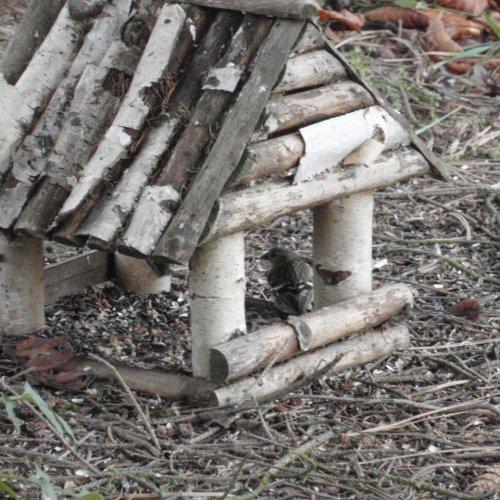 Další samička průzkumnice objevila další krmítko pod nedalekými smrky.