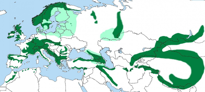 """Areál výskytu skorce– tmavě zelené plochy– celoroční výskyt, světle zelené plochy– zimoviště, """"Zdroj a licence""""((Cinclus cinclus01 distr-2, Autor: Chuunen Baka, Dostupné z: https://commons.wikimedia.org/wiki/File:Cinclus_cinclus01_distr-2.png [cit. 2016–01–22], CC BY-SA 3Unported https://creativecommons.org/licenses/by-sa/3.0/deed.cs))"""