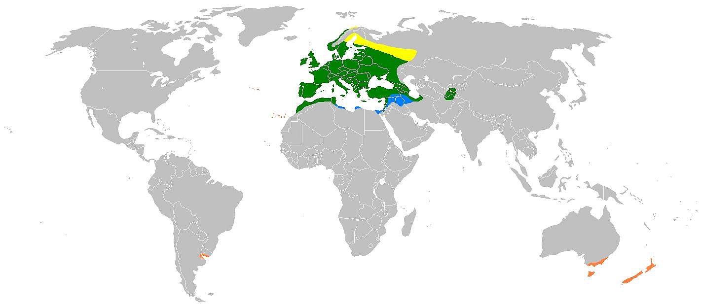 """Areál rozšíření zvonka zeleného– zeleně celoroční výskyt, žlutě hnízdiště, modře zimoviště, oranžově oblast introdukce člověkem, """"Zdroj a licence""""((Rangemap-verdier, Autor: User:Gretaz, Dostupné z: https://commons.wikimedia.org/wiki/File:Rangemap-verdier.png [cit. 2016–03–20], Public domain))"""