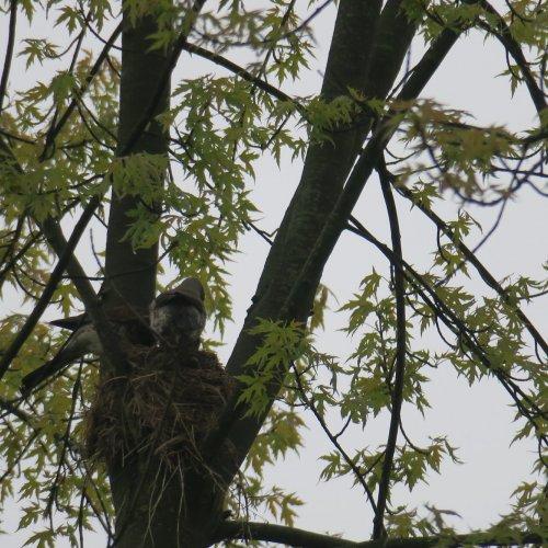 Jakmile dorazil partner splným zobákem krmení, rozdělili rodiče svačinu mezi své potomky a ten odpočatý vyrazil do terénu,…