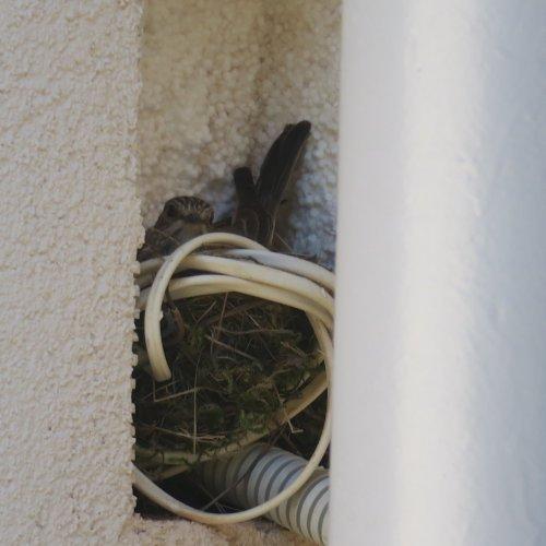 Inkubace vajíček je ulejsků pouze mateřskou záležitostí. Světlá n. S. 19.6.2017
