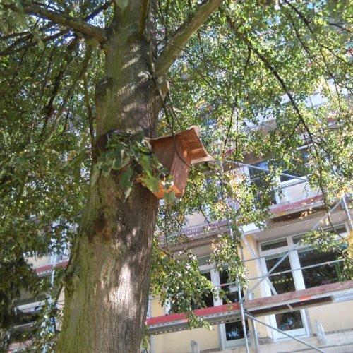 """""""Na jednom stromě, je jím lípa, jsem objevila užitečnou ptačí budku, ze které mám velkou radost. Doufám, že se tam něco na jaře usídlí a já budu mít očem psát.:D"""""""