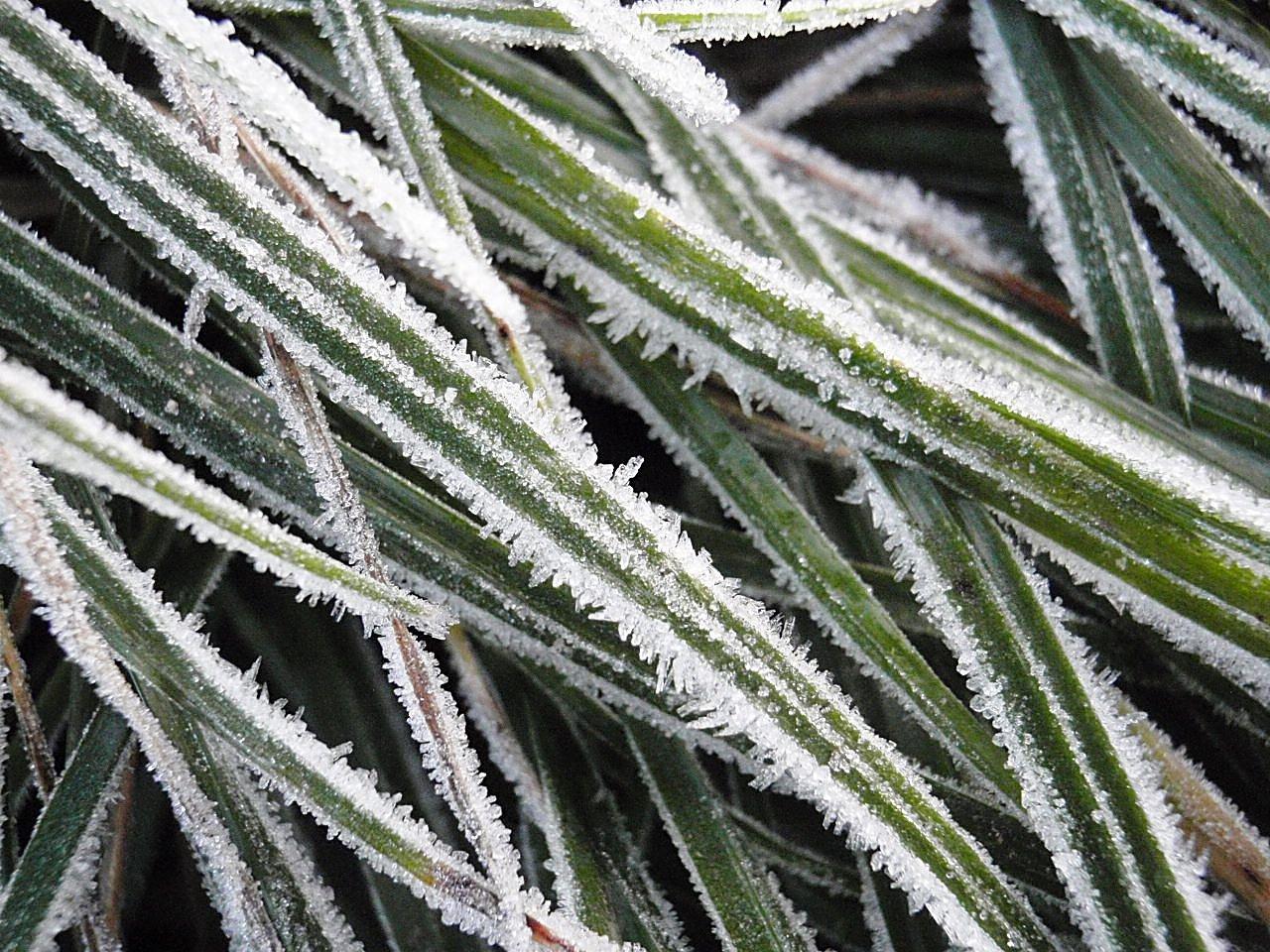1.října přišel první letošní ranní mrazík, který ozdobil trávu, ochladil půdu a přesvědčil první listnáče, že je na čase začít svlékatkabát.