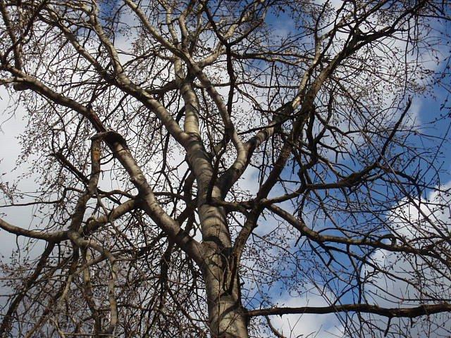 Ostatní stromy areálu však už vyhlížejí jaro opravdu nedočkavě. **Líska** už začíná kvést, pupeny na stromech **osikách** i **vrbách** se začínají probouzet.