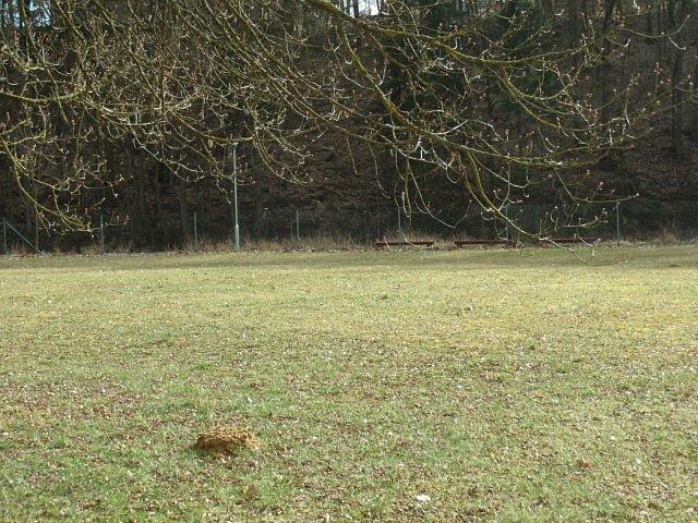 I **krtek** začíná pod zemí trénovat svou oblíbenou činnost.a je první, kdo si letos přišel zasportovat na naše travnaté hřiště.