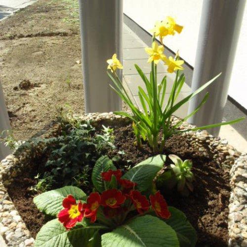 Jaro vstoupilo ido našich květináčů.