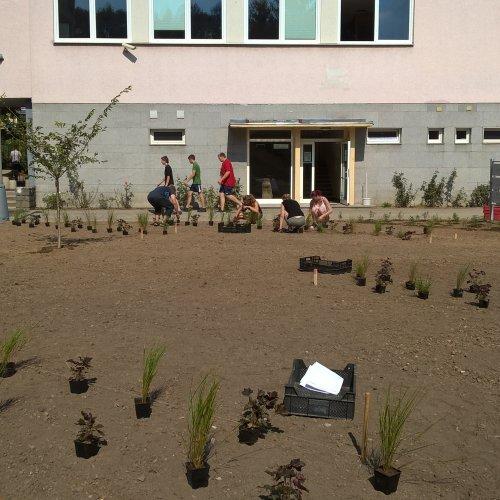 Vytýčené záhony a rozhozené rostliny, začínáme sázet