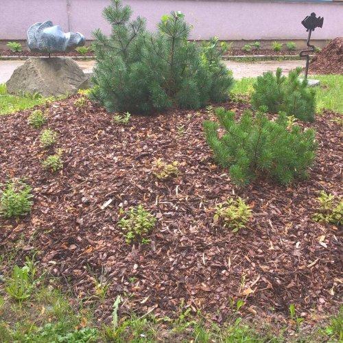 Měsíc po výsadbách - kopeček s šantou