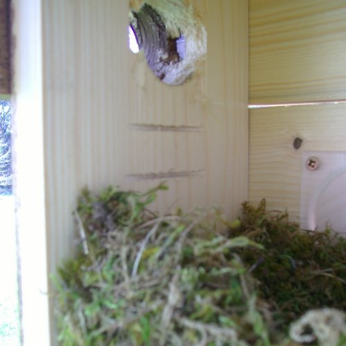 Ve vletovém otvoru budky je vidět čidlo pohybu a na podlážce sýkoří hnízdní materiál. Již brzy ho však měly vystřídat zcela jiné podušky.