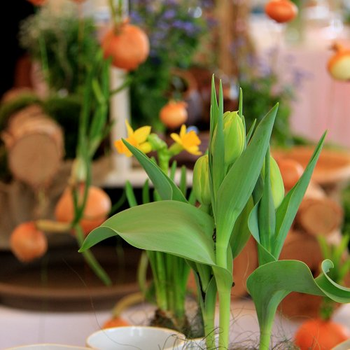 Set květináčů - detail (porcelán) – Tereza CILOVÁ