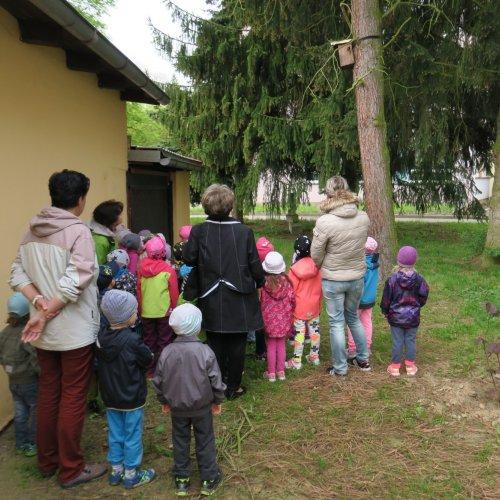 Děti ze Soukromé MŠ Bambino začaly svůj program pozorováním hnízdění našich ptačích spoluobyvatel. Nejprve zkontrolovaly kosí hnízdo, okoukly rorýse a poté pozorovaly modřinky, kterak létají do budky krmit svá mláďata.
