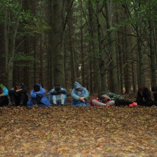 Chvilka meditace v českém bukovém lese