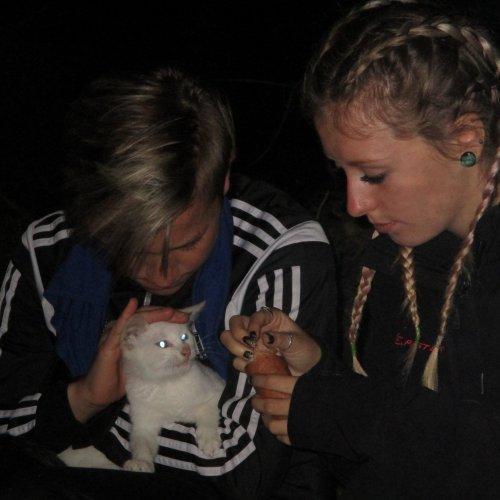Ani koťata :-)