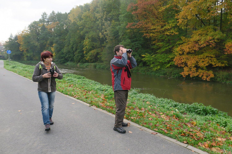 Účastníci světelského Festivalu ptactva mají právě na dohled skorce vodního.