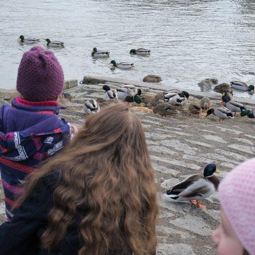 U řeky nám byli opeřenci nejblíže.