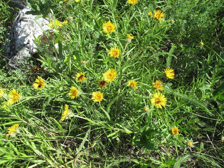 … a okolo rostla spousta nádherných a vzácných rostlin.
