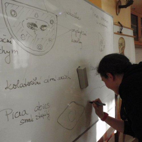 Dan právě na tabuli dokresloval průřez jehlicí douglasky tisolisté – čtvrté zkoumané dřeviny.