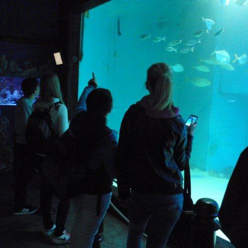 Pojďme se ponořit pod mořskou hladinu. (Omluvte prosím sníženou kvalitu fotografií – kvůli rušení živočichů bylo zakázáno fotit s využitím blesku.)